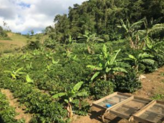 The New Nicaragua: Direct Trade Coffees Rule
