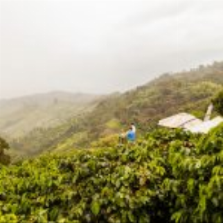 Atop A Mountain, Colombia's Café San Alberto Takes Cues From Vineyards