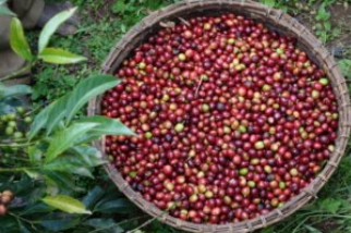 Mountain States Coffee Roasters: High Elevations, Classic Coffees